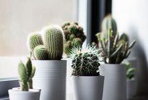 Plantas ❤️