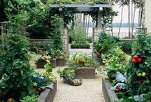 Urban Farm- Vegetable gardening/Permaculture / Garden- French Potager,  and Sustainability / by Pepper