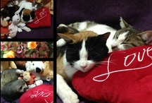 Axel* Brad* Mya* Thajs *e gatti del mondo - cats / Lavagna dedicata ai miei tesori