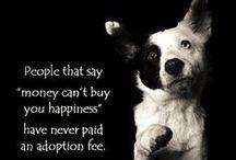 Pet Rescue, Save a Life