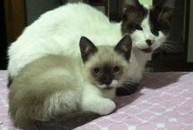 """Gatitos / La mejor mascota que podemos tener Los gatitos""""https://m.facebook.com/notes/happy-michicos-adopciones-bogot%C3%A1/86-curiosidades-sobre-los-gatos/147766801986691  Ahy  encontraran todo sobre estos hermosos animales"""