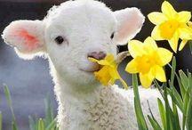 Spring sometime