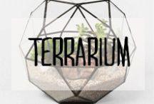 Terrarium / #terrarium #plante #succulentes #vivace #aquarium #vitre #décoration #deco #inspiration #domus #idées