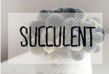 Succulent / #succulent #plante #grasse #terrarium #décoration #deco #inspiration #domus #idées