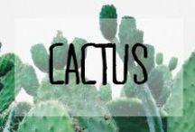 Cactus / #cactus #verdure #green #plante #piquants #décoration #deco #inspiration #domus #idées