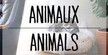 Animaux - Animals / #animals #animaux #bedcat #beddog #cat #dog
