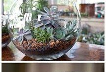 Home : plants
