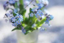 Frühling zieht sein blaues Band