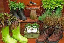 Gartenideen / Dekorationsideen, seltene Pflanzen, Gemüse, Blumen