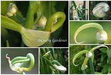 Have - Garden / Havedyrkning