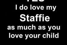 We LOVE Staffies
