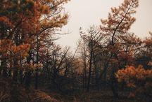 •autumn•