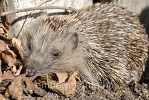 Kik laknak a kertünkben?/Animals in our garden