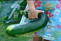 Zöldségek a kertből/Vegetables from our garden