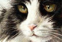 cat adoration / by Myrthe Krook