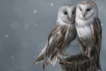 owl obsession / by Myrthe Krook