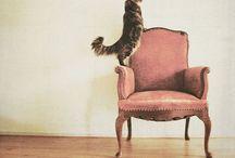 Chairs & Sofas / by Kamishiro Yuka