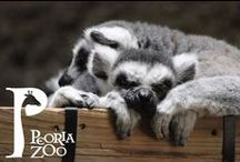 Peoria Zoo Favorite Animal Photos / Here are just a few of the staff's fav photos!
