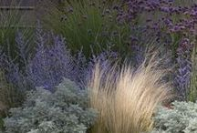 Άνυδρος κήπος