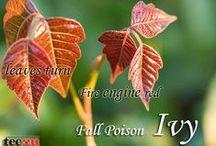 Tecnu / Tecnu for poison oak and poison ivy.