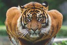 Állati jó/Animals / Wildlife