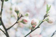 Spring / spring / flowers