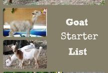 Goats / Everything you need to know