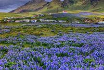 Iceland/Izland