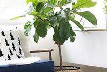 plant / endless flora/plant