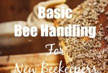 Honey bzzz