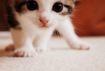 Kitties! / What greater gift than the love of a cat?                              ~Charles Dickens / by Kelsey Lewis