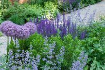 Bloemen  / Tuinen en bloemschikken