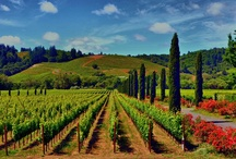 Favorite Vineyards / A few of our favorite getaways / by Tipsy Totes