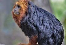 Monkey Primates / their apart of us