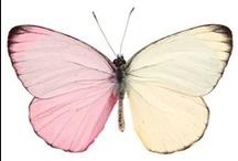 Les inspirations du papillon // Butterflies / Quelques unes de nos inspirations pour la conception graphique de nos papillons magiques.