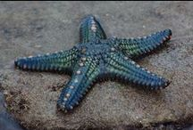 starfish / see the colours and designs