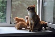 Mothers and Kittens / loving families