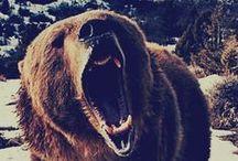Bears / grr