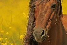 Beauté chevaline / Chevaux
