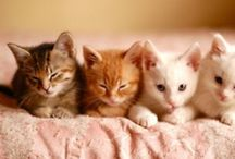 The Cats Meow / What Greater gift than the Love of a Cat.. / by Cindy Frazier