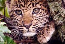 Beauté animale