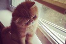 Meow |