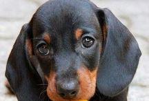 ❤️ Puppy love ❤️
