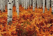 写真 | 自然 / photography | nature
