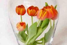 Kukkailoa / Vinkkejä kukkien hoitoon ja ideoita kauniisiin kukkakoristeisiin.