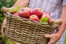 Kesän makujen säilöntä / Vinkkejä, reseptejä ja tarvikkeet kesän makujen säilöntään.