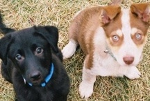 Beloved Mutts / My two boys are my babies...I love all things dogs.