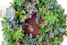 Succulents ~ have soul... / The beauty of succulents / by My Soulful Home