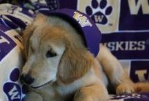 Top Dawgs / Best dawg blog, paws down. WOOF! / by University of Washington