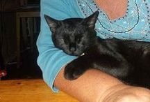 Sulu My Clever Black Cat / Sulu is a rescue cat I adopted from the local cat shelter. He's sweet and clever. I'm training him and he can perform many cute tricks. Yes, you can train a cat! ... If the cat wants to be trained. Sulu loves it.